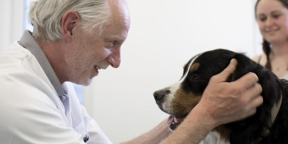 hond ziekenhuis voor dieren verwijscentrum