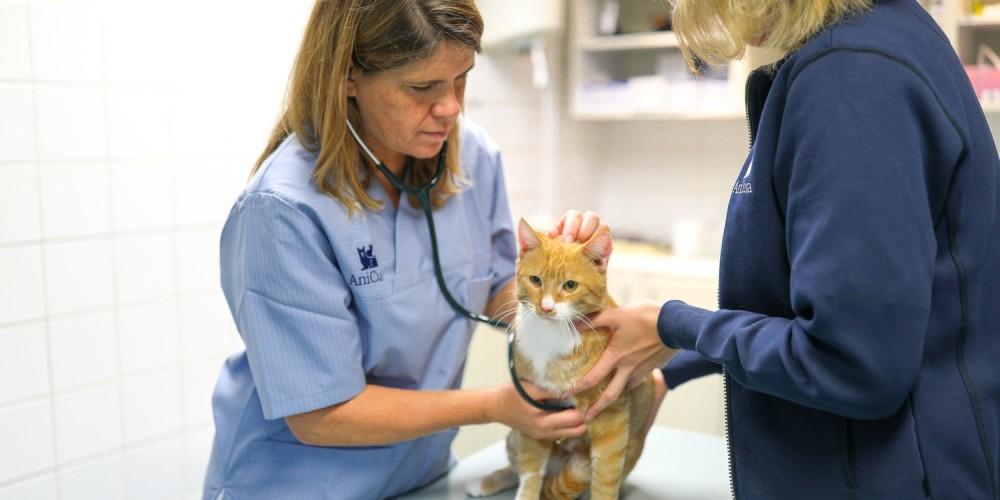 Katten dierenarts