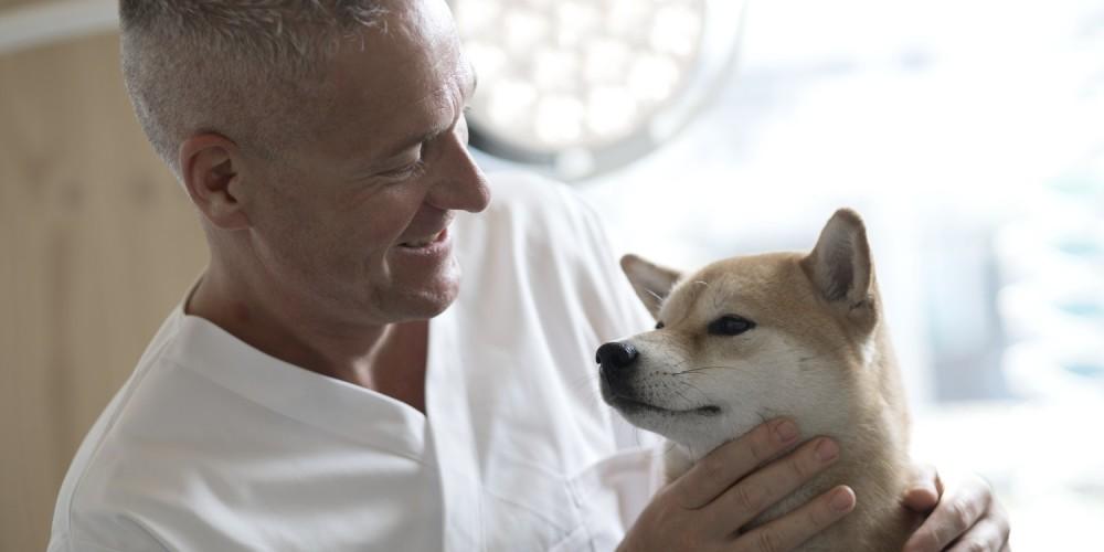 Dierenarts met hond Shiba Inu