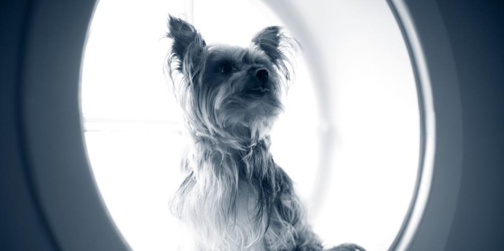 Hund ser ut vinduet