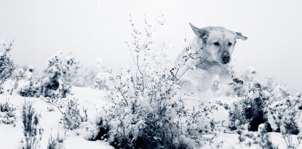 Dog playing in snow AniCura