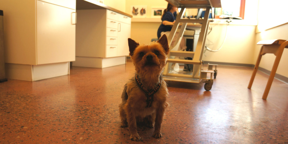 hunden Elliott sitter på golvet på polikliniken