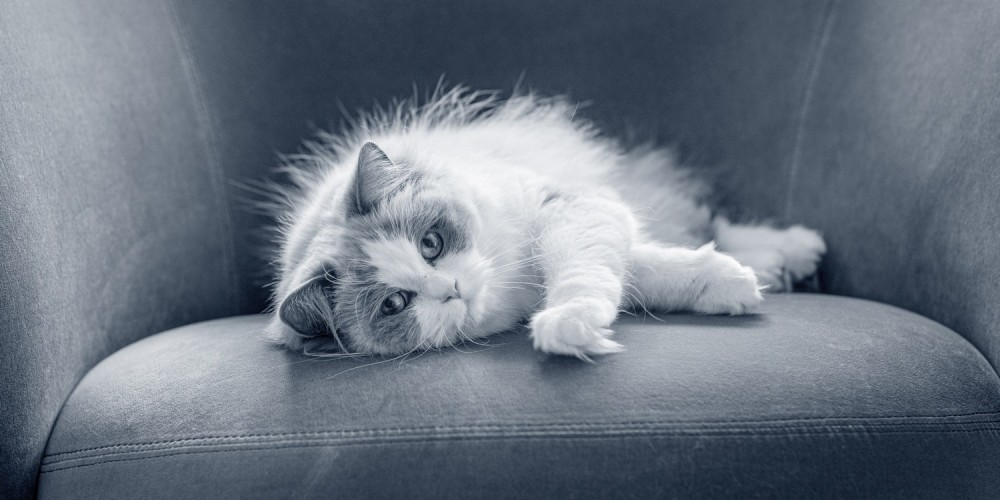 Pälsvårdsråd för din katt