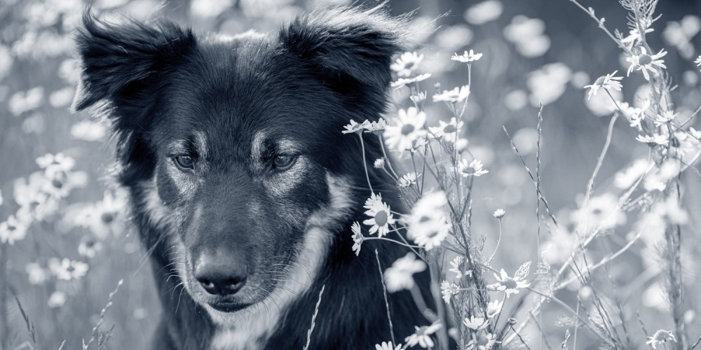 Fästingmedel för hund