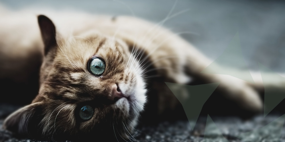 kat huid