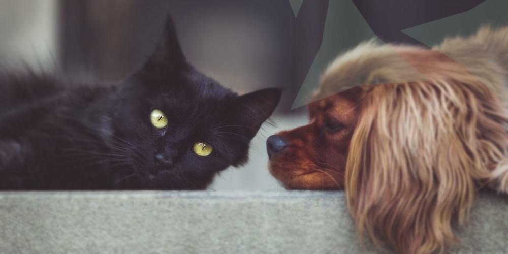 hond en kat bloedtransfusie