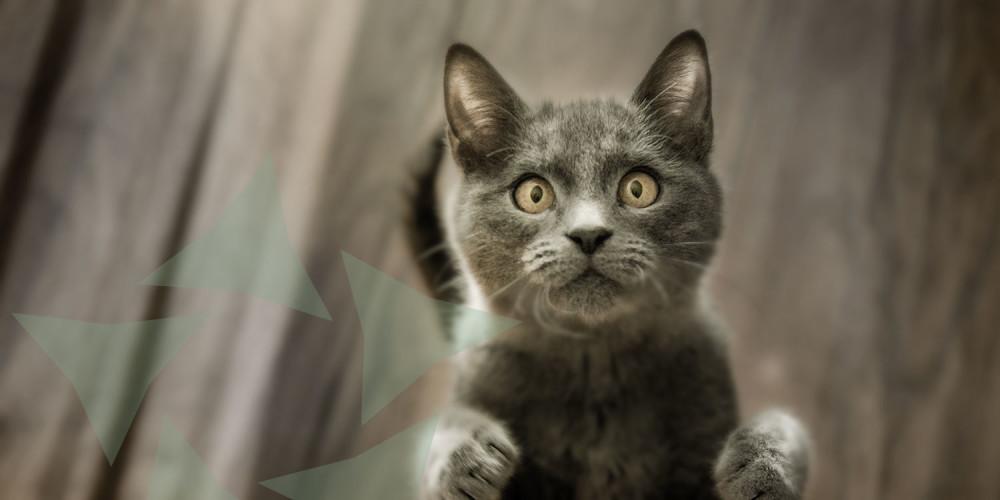 Kat opspringen