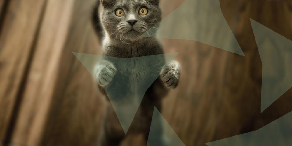 kat dierenarts deventer