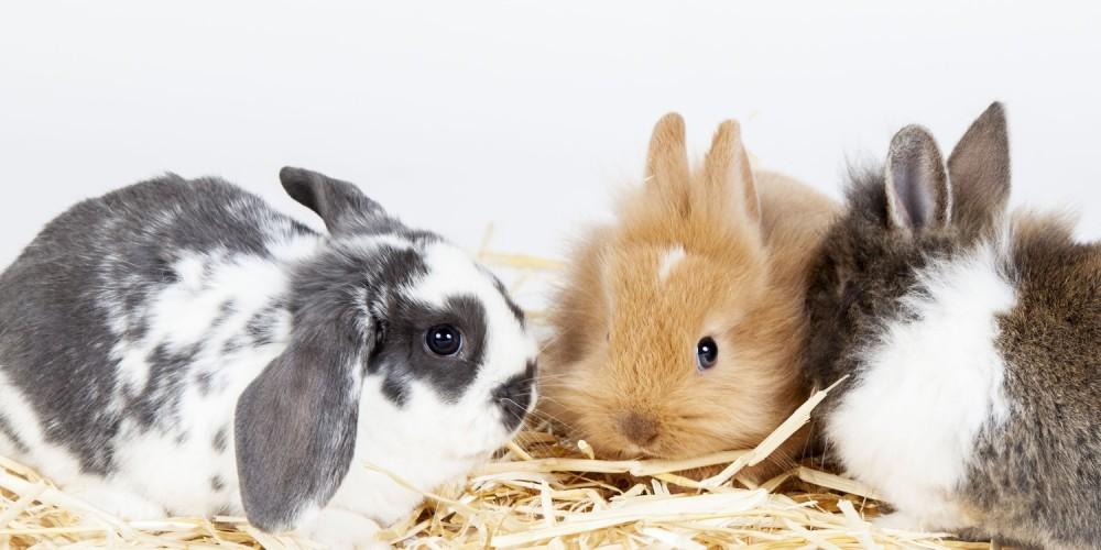 konijnen naast elkaar