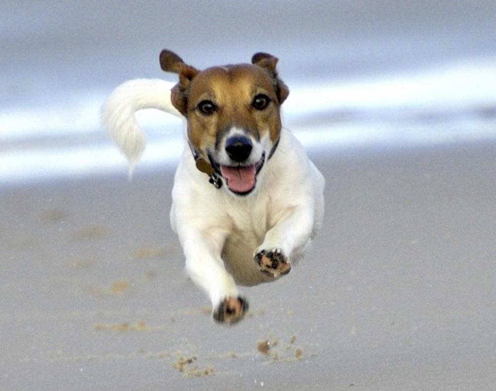 Hond rennen strand