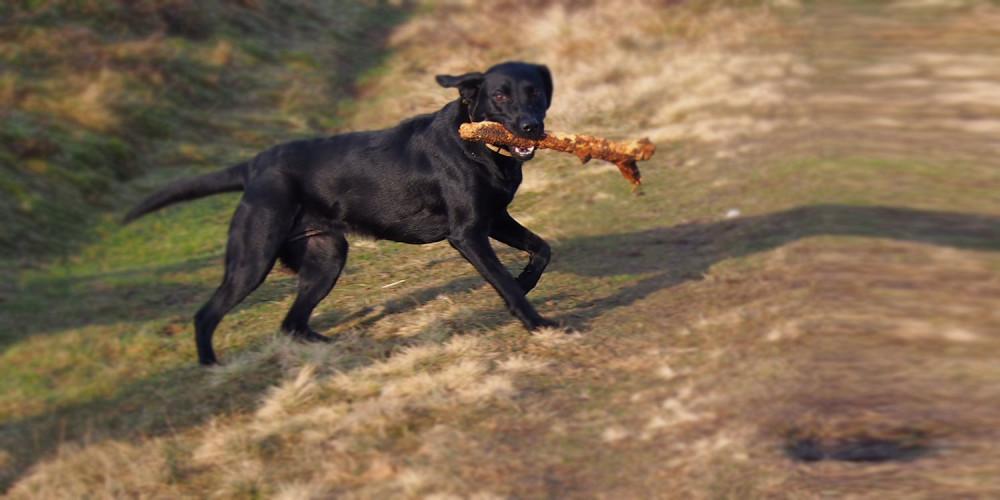 hond hardlopen