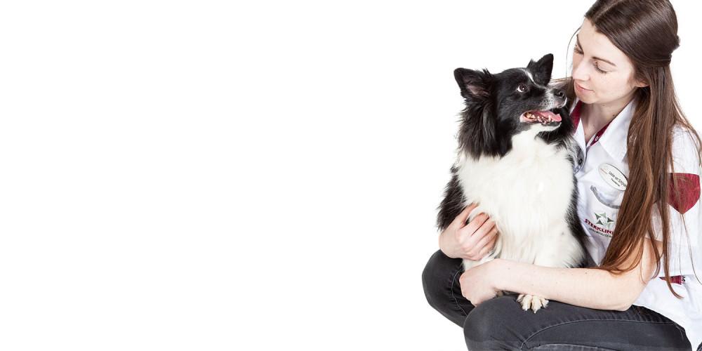 Paraveterinair met hond collie