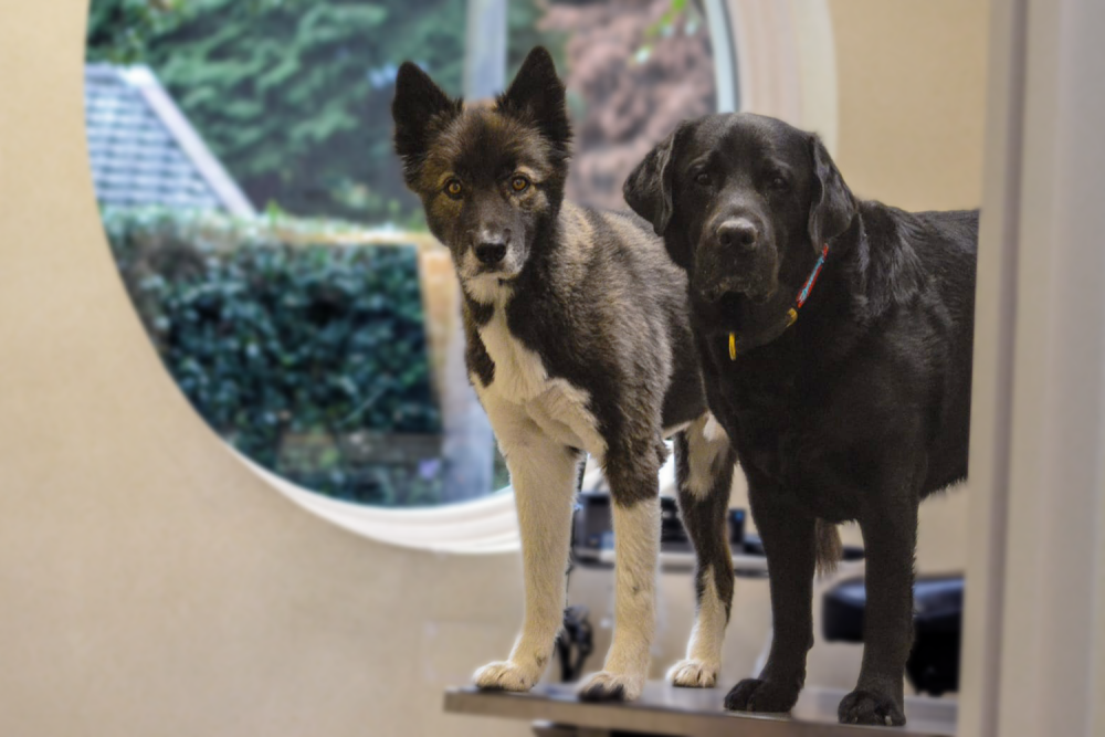dierenarts Naarden Bussum hond