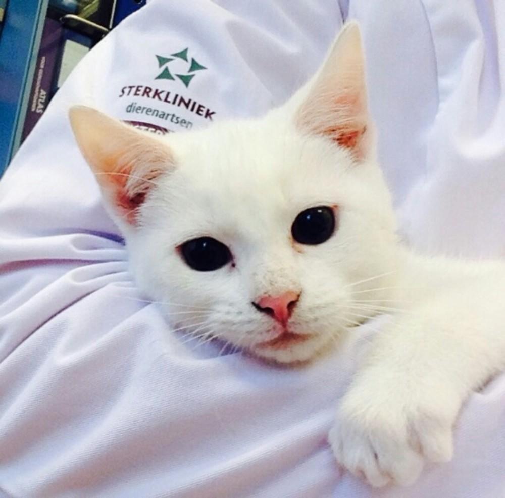 Witte kat bij dierenarts