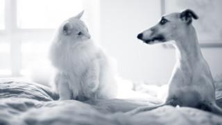 Katte mere kræsne end hunde.jpg