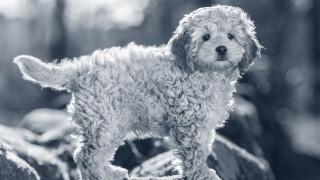 Bad og pelspleje hundehvalp