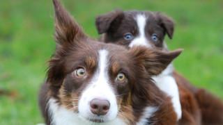 Hundemor med hvalp