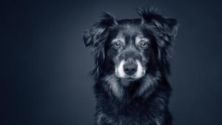 gammel hund godt liv