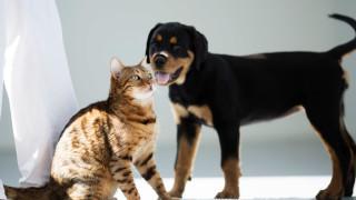 Coronavirus bei Haustieren