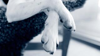 Hundtassar tass hund