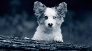 Hundvalp i skogen