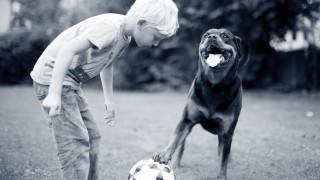 vaccinatie hond