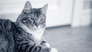 kat ligt op de vloer