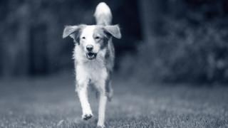 Hond loopt buiten