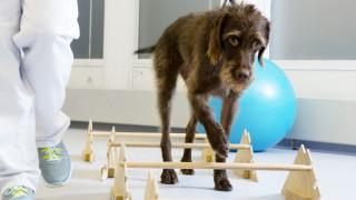 Revalideren hond