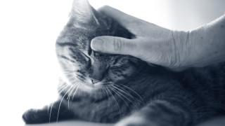 Vaccinatie kat