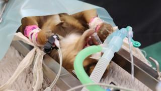 dierenarts voert operatie uit