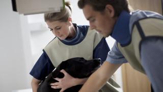 Voortplanting hond rontgen