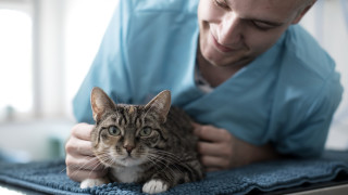 Dierenarts behandelt een kat