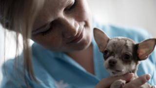 De dierenartsassistent verzorgt hond