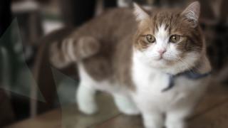 Kattenkliniek Hillegom