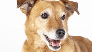 tumorbehandeling huisdier