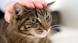 Tandnedbrydning hos kat