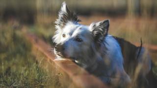 Aktiver din hund under coronapandemien