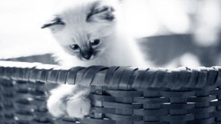 Tips til at aktivere din kat
