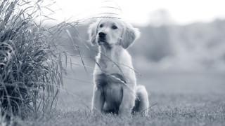 10 spørgsmål til opdrætteren inden du køber hundehvalp