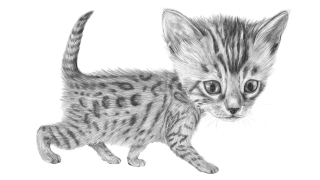 gatosduermen