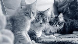 Katter