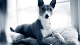 Coronavirus Hund Hongkong