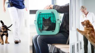 hund och katt på besök hos våra djursjukhus och kliniker