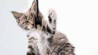 Kitten met stethoscoop