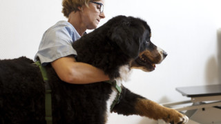 Hond helpen afvallen