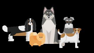Honden ras kiezen