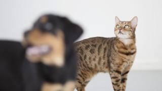 Honden en katten en corona