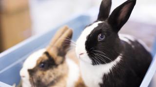 Vaccinatie konijn