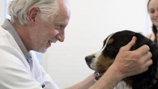 hond bij dierenarts op doorverwijzing